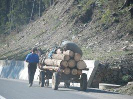 căruță - lemne