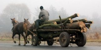 căruța cu lemne-8