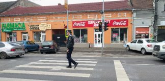 zebra poliţia Aleșd-8