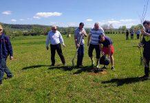 Angajaţii Primăriei Aleșd, au ieșit la plantat copaci