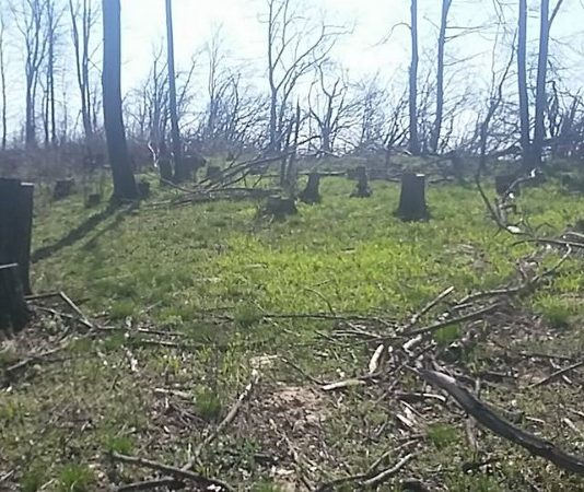 lemne pădure tăiat-800x450