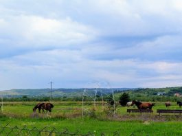caii Tinăud-800x450