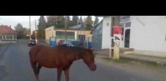 Cal în stradă Aleșd