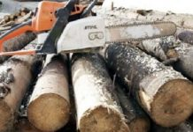 lemne foc -800x400