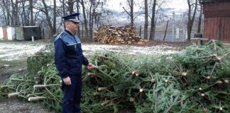 Brazi fără documente legale, confiscați de polițiști-800x450