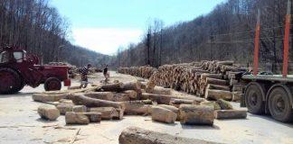 Ocolul Silvic Aleşd valorifică lemn pentru încălzire-1