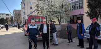 plantare copaci Aleșd