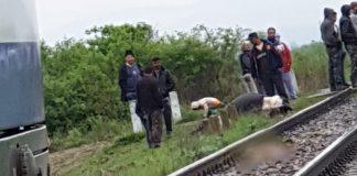 vaci lovite de tren Butan-Alesd
