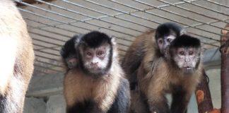pui Grădina Zoologică Oradea