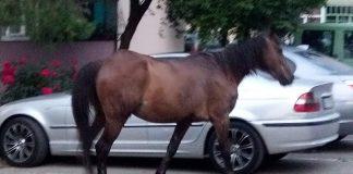 cai liberi pe strada Aleșd