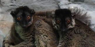 Animale noi la Zoo Oradea.