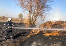 incendiu vegetație