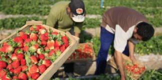 locuri de muncă în domeniul agricol (recoltare fructe) în Spania