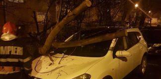 Copac căzut mașina Oradea