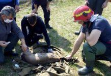 Căprioară salvată de pompieri