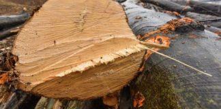 Copac tăiat