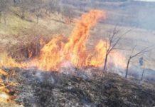 Incendiu de vegetație la Țigănești