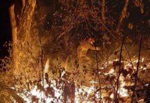 pompieri incendiu vegetatiee
