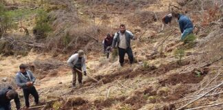 lucrări de împădurire