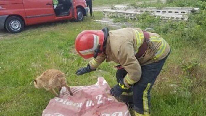 Câine rămas captiv într-o vale din localitatea Țețchea, salvat de pompierii aleșdeni