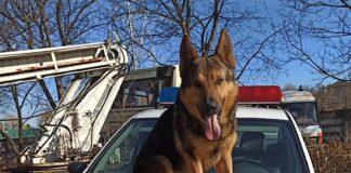 câinele poliţist Ozzy