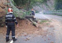 Drumul blocat copaci