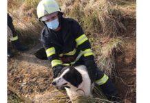 Câine salvat de pompieri după ce a căzut într-un canal