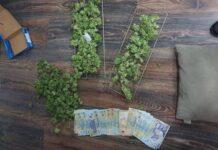 canabis confiscat la Aleșd