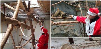 Moș Crăciun a hrănit animalele de la Zoo Oradea