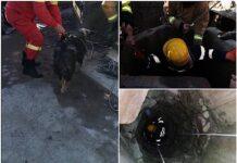 câine salvat dintr-o fântână