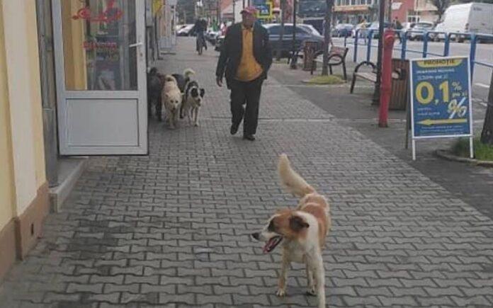 câinii fără stăpân din orașul Aleșd
