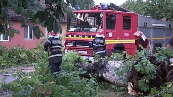 Pompieri copacii cazuți
