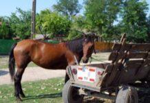 Cal și căruță
